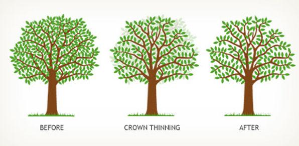 Tree Pruning & Cutting Service Bristol