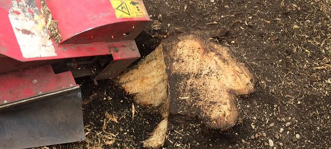 King Tree Services Stump Grinding Removal