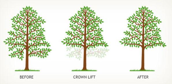 Tree Crown Cutting Service Bristol