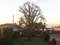 tree maintenance service bristol
