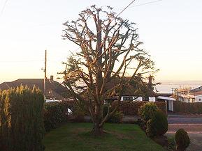 King Tree Servces Trimming & pruning