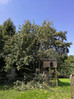 Our tree cutting services save a much loved family tree in Bristol