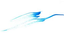 Les ailes de l'océan