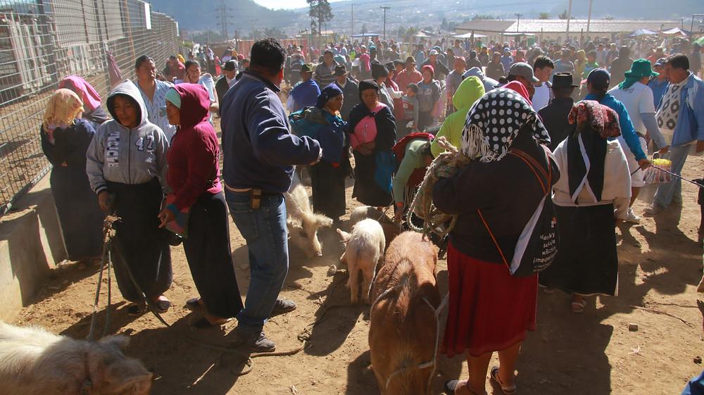 Mercato degli animali di Otavalo