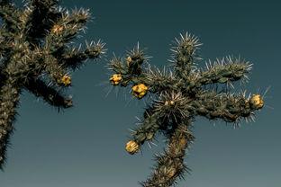 Blue & Thorns