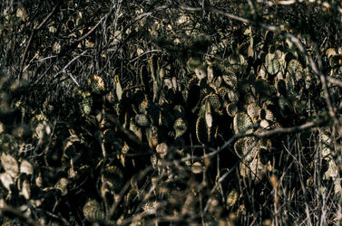 Green Thorny landscape