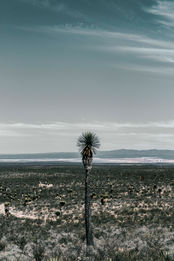 Thorny Landscape (vertical)