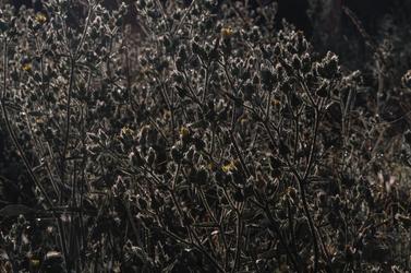 Waking flowers