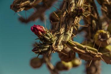 Cacti & Ant
