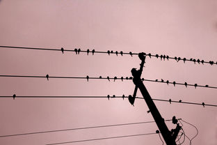 Birds and Pink