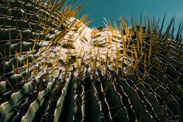 Tropical Thorns I
