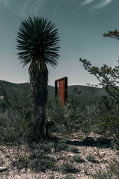 Yucca & Sculpture
