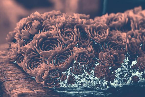 Cactáceas en rosa y cyan