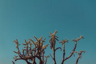 Cacti & Blue