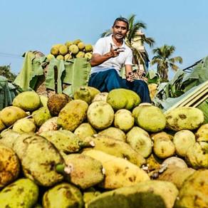 Originária da Índia, jaca ganha o mundo como supercomida vegana