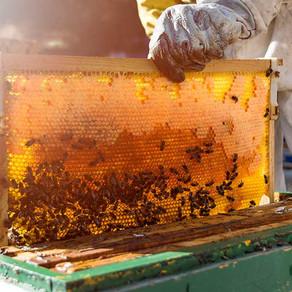 A realidade não tão doce do mel de abelha