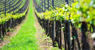 wine trail.jpg