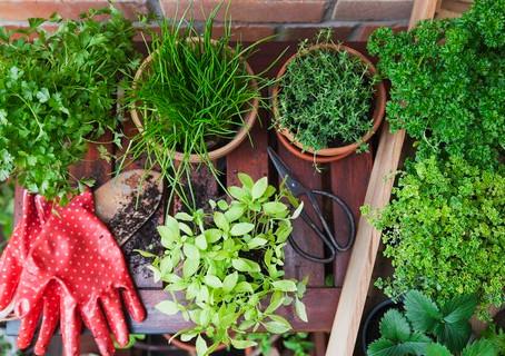 Aprenda a fazer sua própria horta em casa