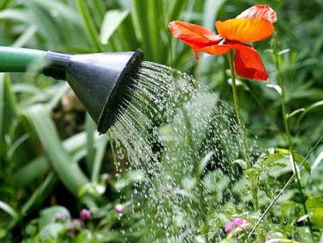 A importância da irrigação de jardins