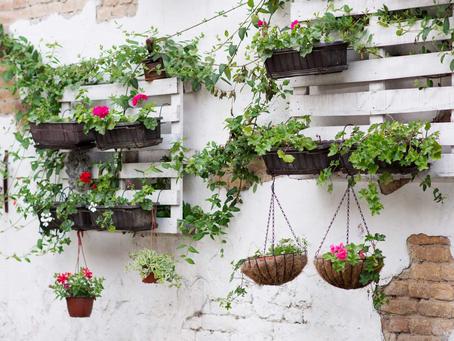 Como fazer um jardim vertical?