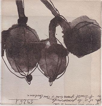 グーズベリー 12.5x12cm