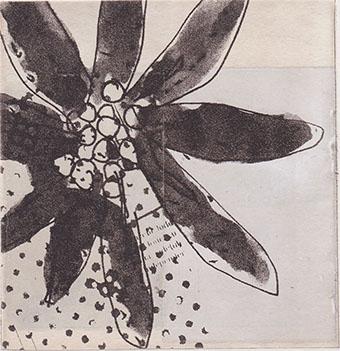 エーデルワイス 12.5x12cm
