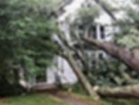 tree on house.jpeg