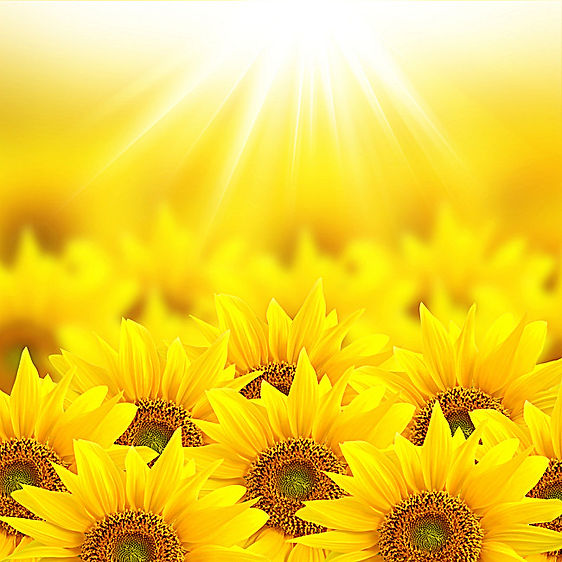 sunflowerbright.jpg
