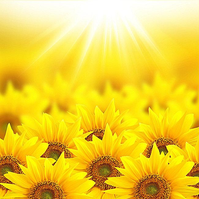 sunflowerbright.jpg