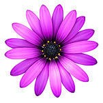 Purpleflowertransparent.jpg
