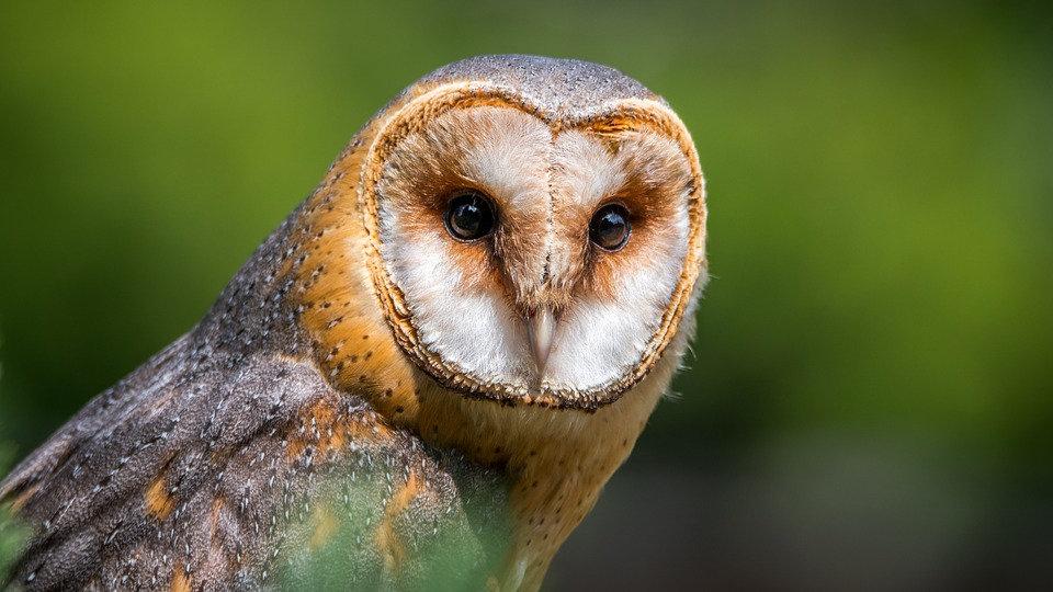 Barn Owl Membership