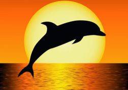 """2 DAY """"Stunning Sea Creatures"""" Ages 10-15"""