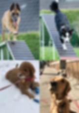 Chiago dog walking service