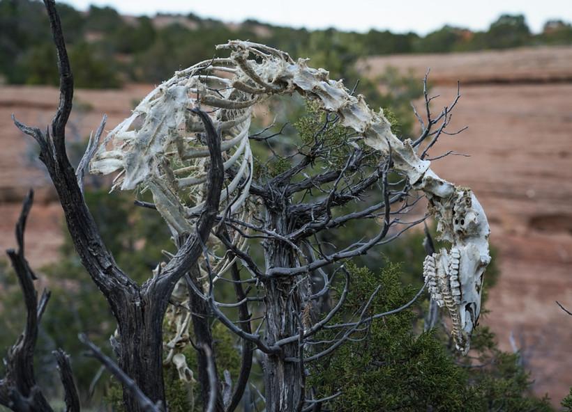 Mountain Lion Kill.jpg