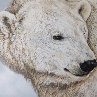 Toile Polar Bear