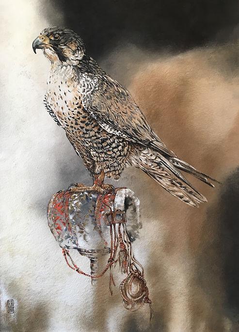 Falcon .JPG