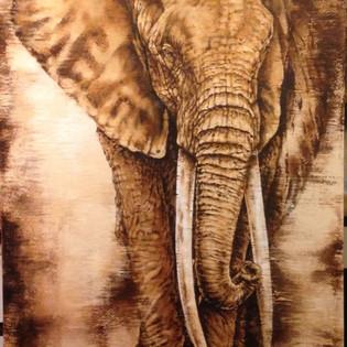 Bâche éléphant sépia