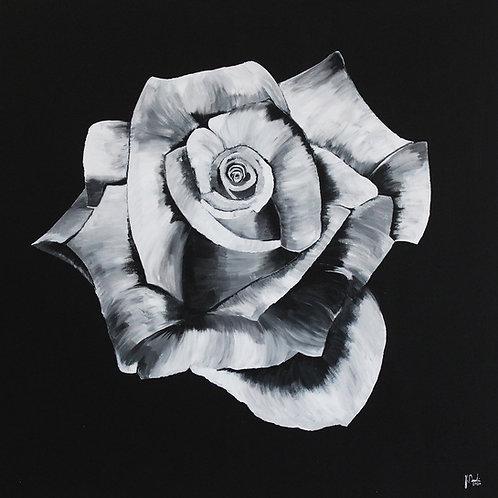 """Jonas Deubelbeiss """"white rose"""""""