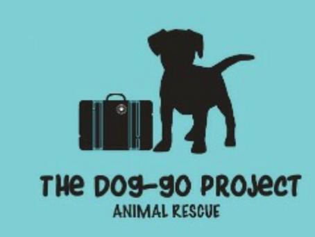 ¿Vas a viajar a Canadá y quieres ayudar a un perrito? Esto te va a interesar.