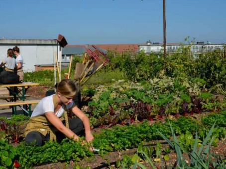 Dinamarca está por  convertirse en el primer país del mundo 100% orgánico.