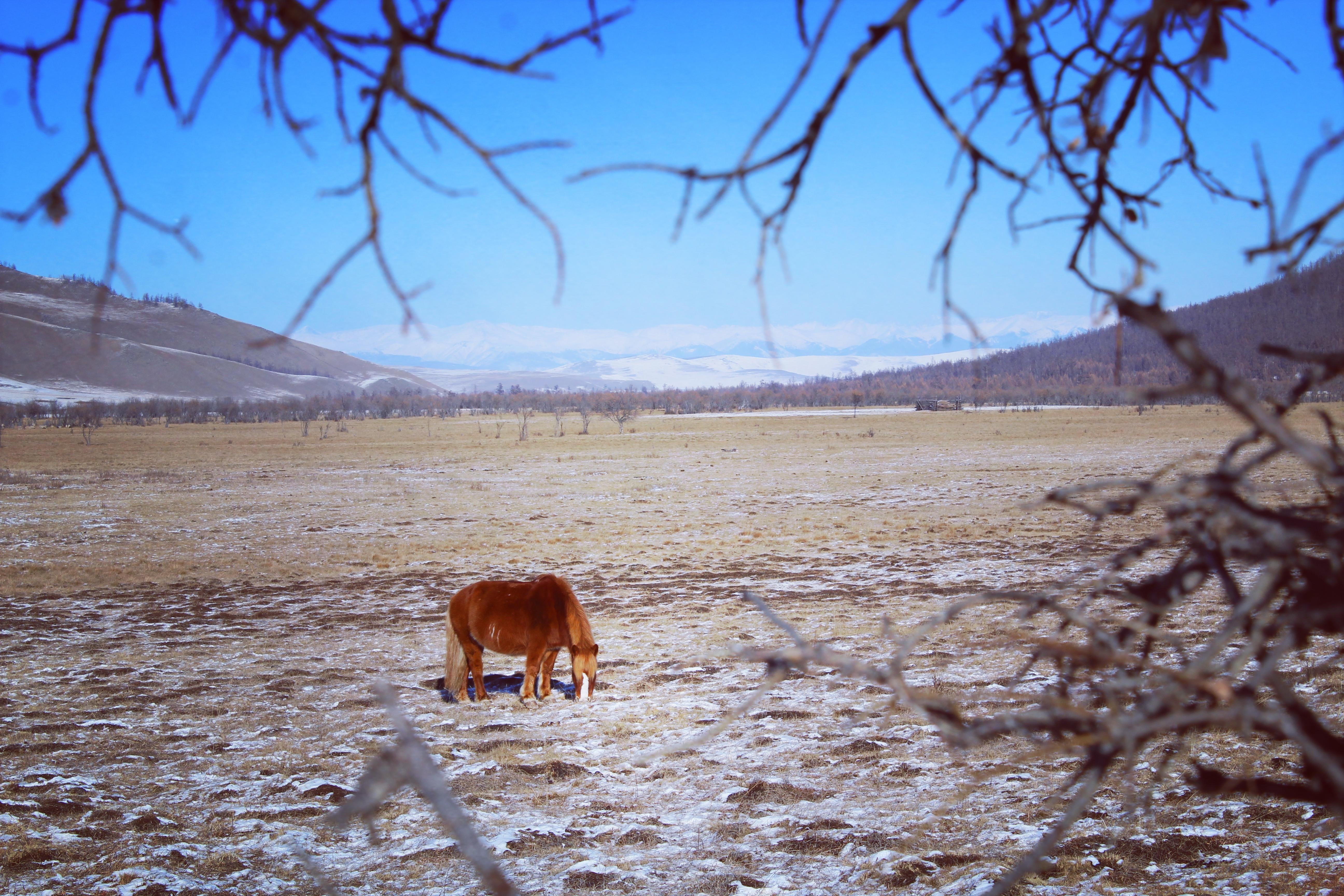 Taiga Wind Horse