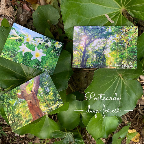 POSTCARDS-deep forest-