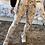 Thumbnail: Leggings cuero Lorena