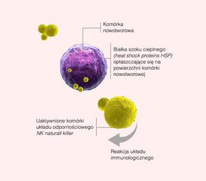 Immunoterapia raka, onkologia a hipertermia, oddziaływanie, skuteczność, zalety