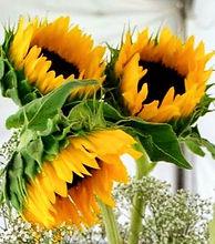 sunflower-bath-towel-set-party-decor-wedding-decorations-ideas-for-paper-products-kitchen-amazon-pla