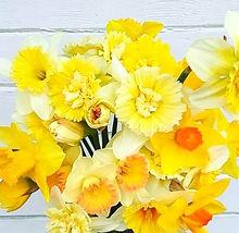 daffodils_edited_edited.jpg