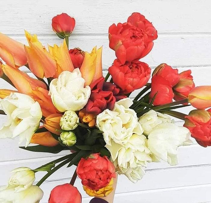 tulips_edited_edited.jpg