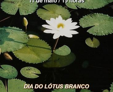 Dia do Lótus Branco