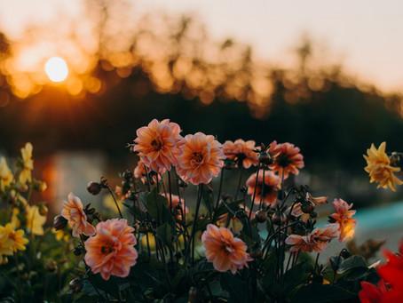 Leve a primavera pra sua casa