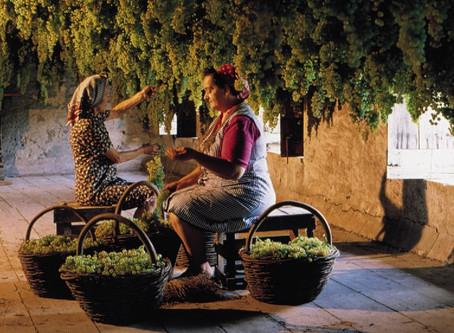 Famiglia Zonin: vinhos que conquistaram o mundo
